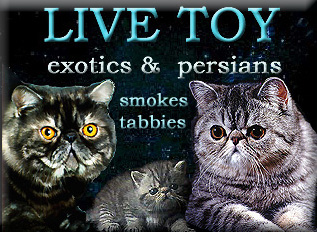 Live Toy Cattery